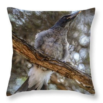Pied Currawong Chick 1 Throw Pillow