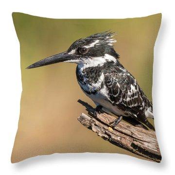 Pied Kingfisher Throw Pillow