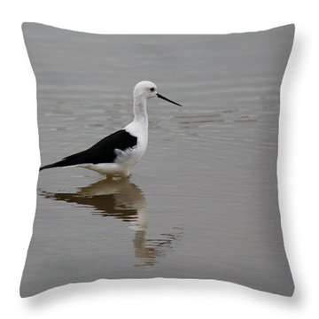 Pied Stilt Throw Pillow by Ramabhadran Thirupattur