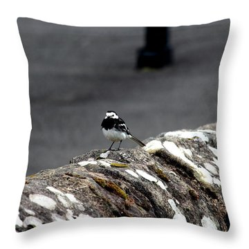Pied Wagtail Throw Pillow