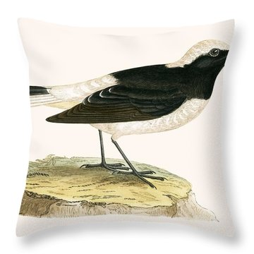 Pied Wheatear Throw Pillow by English School