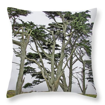 Pierce Pt. Study Throw Pillow