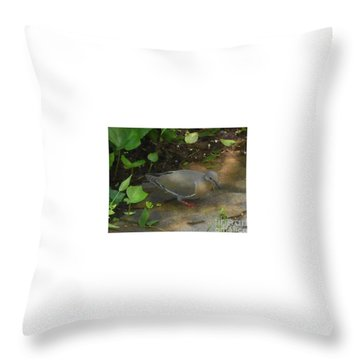 Throw Pillow featuring the photograph Pigeon by Felipe Adan Lerma