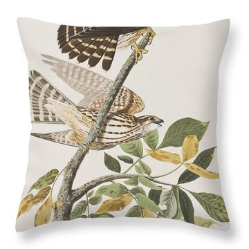Pigeon Hawk Throw Pillow by John James Audubon