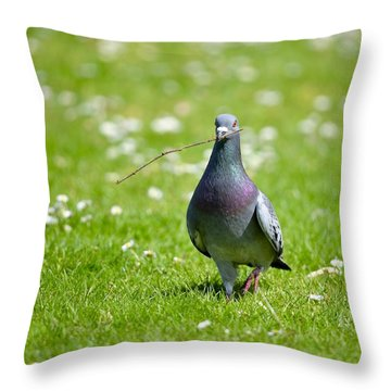 Pigeon In Spring Throw Pillow