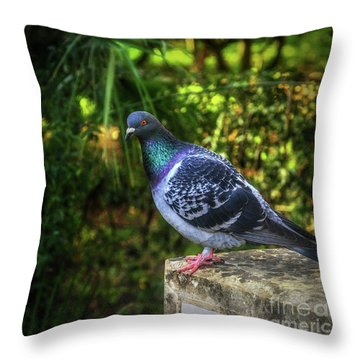 Pigeon On The Edge Throw Pillow by Stephan Grixti