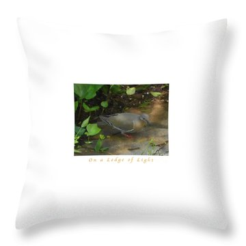 Throw Pillow featuring the photograph Pigeon Poster by Felipe Adan Lerma