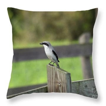 Pigeon-toed Shrike Throw Pillow