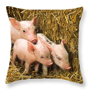 Piglets Throw Pillow by Science Source