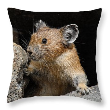 Pika Looking Out From Its Burrow Throw Pillow