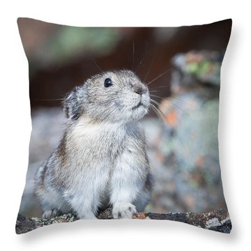 Throw Pillow featuring the photograph Pika Portrait by Tim Newton