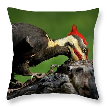 Throw Pillow featuring the photograph Pileated 3 by Douglas Stucky