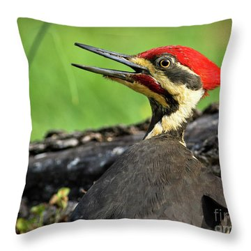 Pileated Throw Pillow by Douglas Stucky