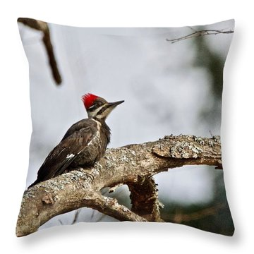 pileated Woodpecker 1068  Throw Pillow by Michael Peychich