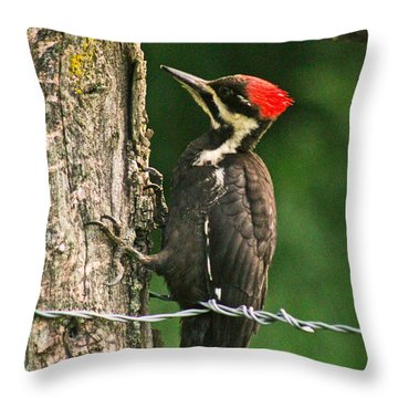 Throw Pillow featuring the photograph Pileated Woodpecker by Jessica Brawley