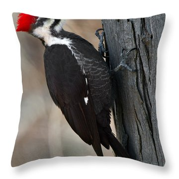 Pileated Woodpecker Throw Pillow by Timothy McIntyre