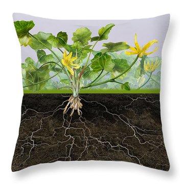Pilewort Or Lesser Celandine Ranunculus Ficaria - Root System -  Throw Pillow