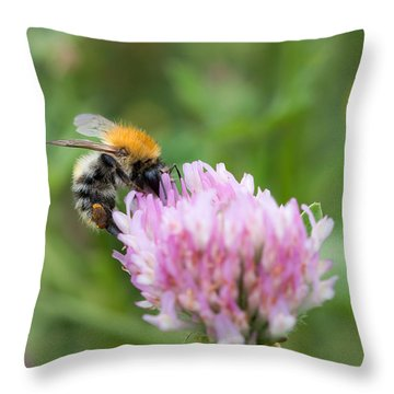 Pillination - Bumble-bee In Bloom Throw Pillow