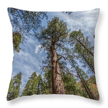 Pine Cathedral On The West Fork Throw Pillow