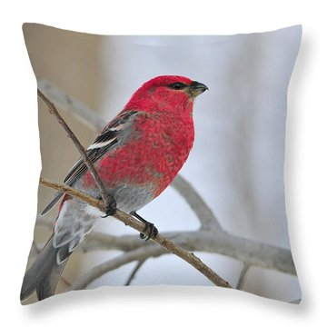 Pine Grosbeak Throw Pillow by Tony Beck