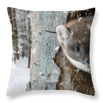 Pine Marten In Tree In Winter Throw Pillow