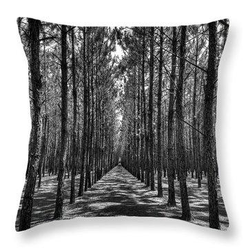 Pine Plantation 5655_6_7 Throw Pillow
