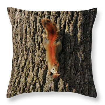 Piney Squirrel Throw Pillow by David Arment