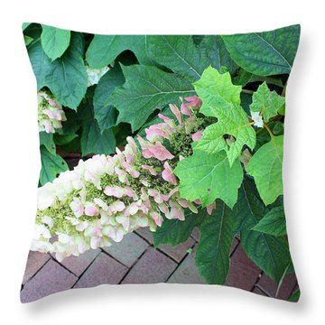 Throw Pillow featuring the photograph Pink And Cream  by Ellen Tully