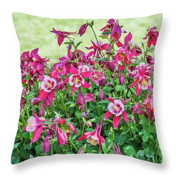 Throw Pillow featuring the photograph Pink And White Columbine by Sue Smith