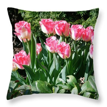 Pink And White Fringed Tulips Throw Pillow by Louise Heusinkveld
