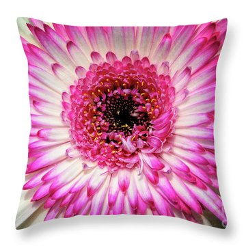 Pink And White Gerbera Daisy Throw Pillow by Jim and Emily Bush