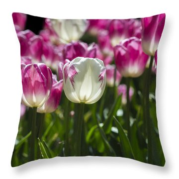 Throw Pillow featuring the photograph Pink And White Tulips by Angela DeFrias