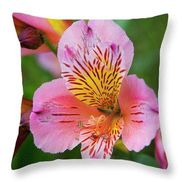 Pink And Yellow Flora Throw Pillow
