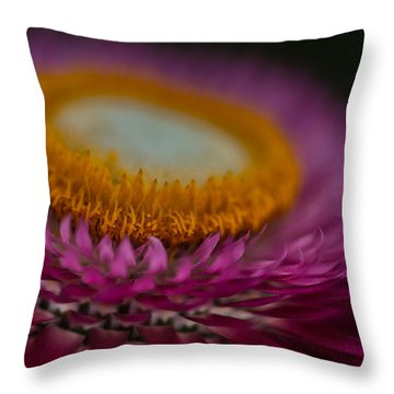 Pink And Yellow Strawflower Close-up Throw Pillow