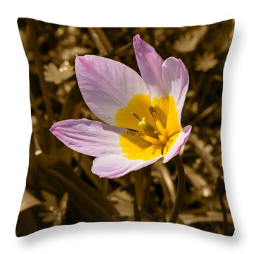 Pink And Yellow Tulip On Sepia Background Throw Pillow