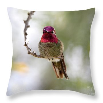 Pink Anna's Hummingbird Throw Pillow