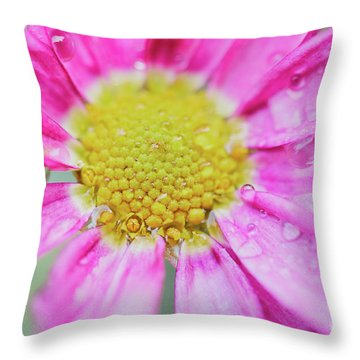 Throw Pillow featuring the photograph Pink Aster Flower With Raindrops by Nick Biemans
