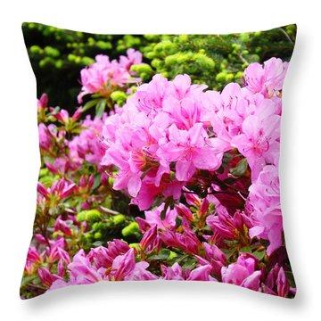 Pink Azalea Flowers Landscape 11 Art Prints Canvas Artwork Framed Art Cards Throw Pillow by Baslee Troutman