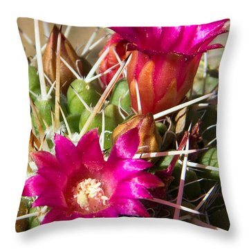 Pink Barrel Cactus Flowers Throw Pillow