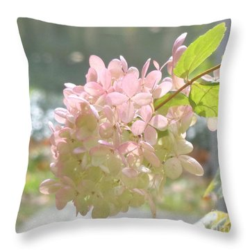 Pink Bloom In Sun Throw Pillow