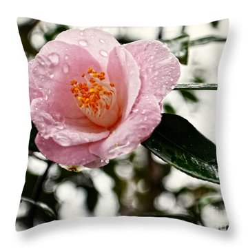 Pink Camellia With Raindrops Throw Pillow