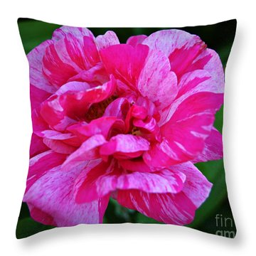 Pink Candy Stripe Rose Throw Pillow