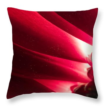 Pink Chrysanthemum Flower Petals  In Macro Canvas Close-up Throw Pillow