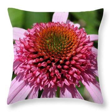 Pink Coneflower Close-up Throw Pillow