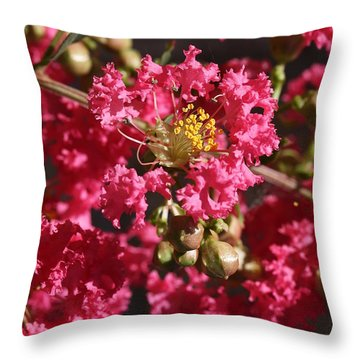 Throw Pillow featuring the photograph Pink Crepe Myrtle Flowers by Debi Dalio