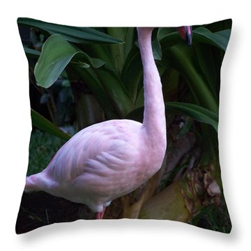 Pink Curiosity Throw Pillow by Karen Wiles