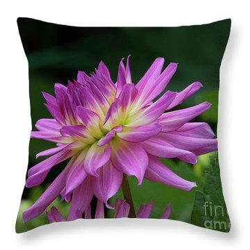 Pink Dahlia Throw Pillow by Glenn Franco Simmons