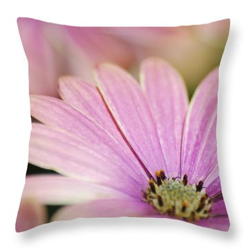 Throw Pillow featuring the photograph Pink Daisy by Ramona Whiteaker
