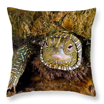 Pink Eyes Throw Pillow by Robert Charity