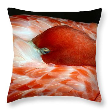Pink Flamingo Throw Pillow by Inspirational Photo Creations Audrey Woods